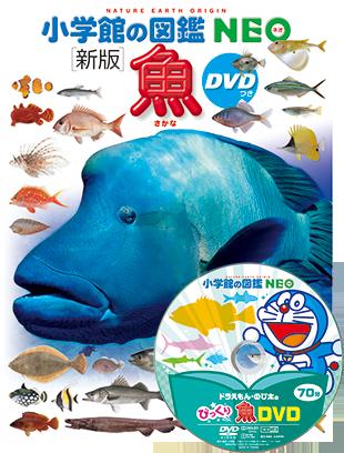 森 魚 図鑑 とび