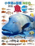 DVDがついて新しくなった最新版!『小学館の図鑑NEO〔新版〕 魚 DVDつき』