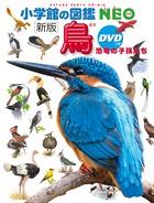 新版 鳥 DVDつき